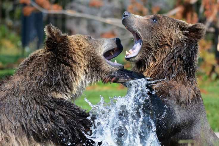 nature water playing animals